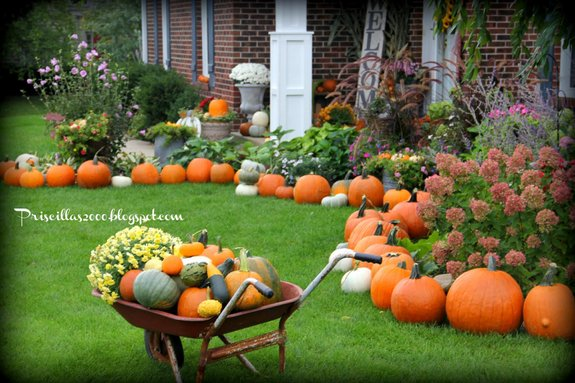 Priscilla has 108 pumpkins in her autumn yard - so festive!