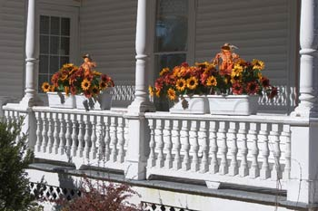 Window boxes for Thanksgiving