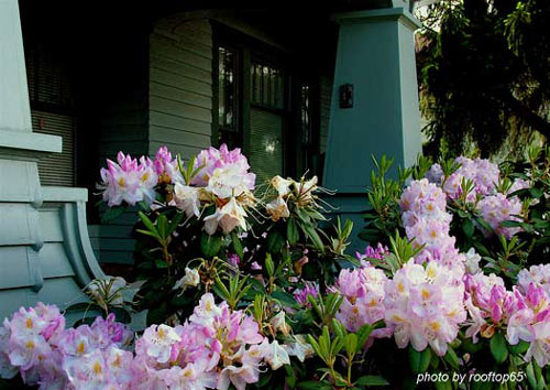Colorful flower arangement in front of house