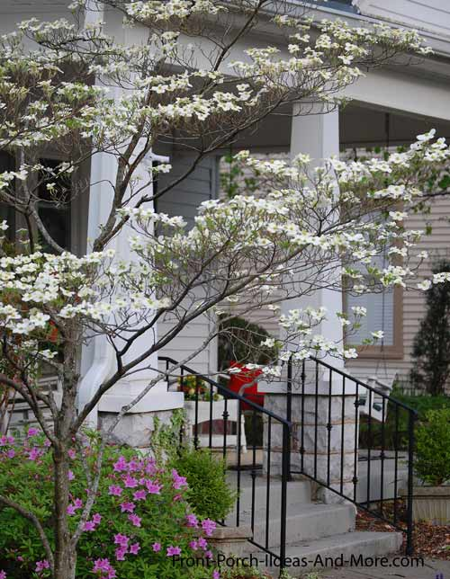 dogwood trees in front of porch