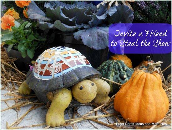 Meet Fred our little turtle friend