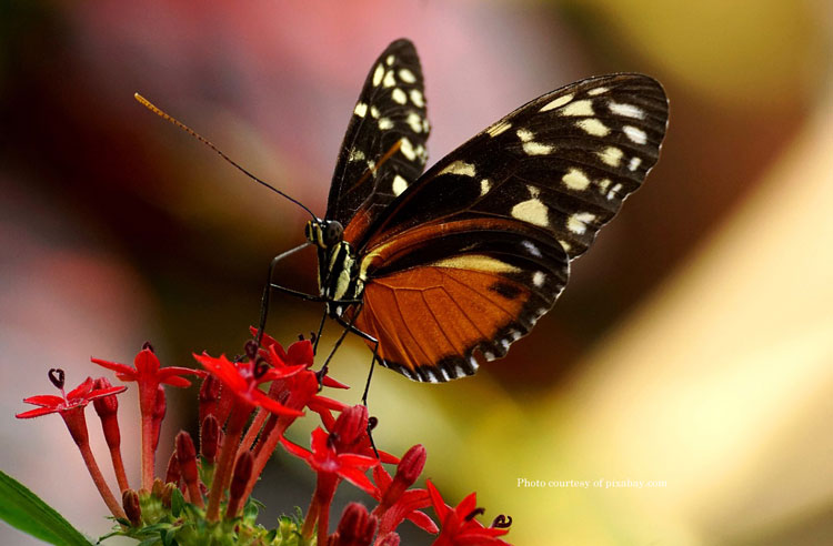 beautiful butterfly from pixabay