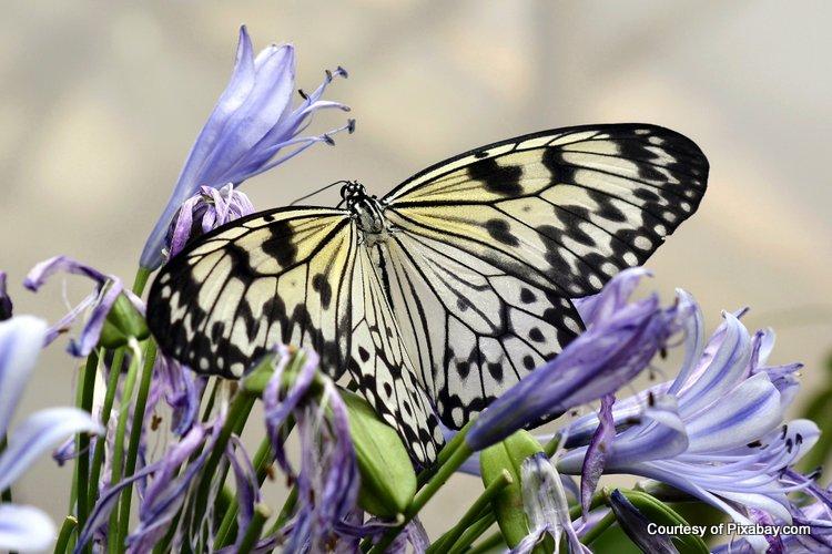 Beautiful butterfly enjoys these lovely purple flowers