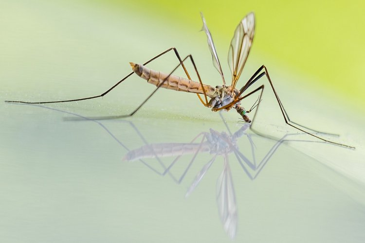 Screening Materials For Noseeums And Mosquitos