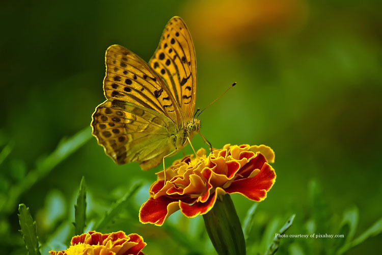 beautiful butterfly on flower from pixabay