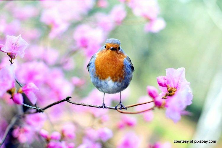 spring bird in beautiful flowering tree