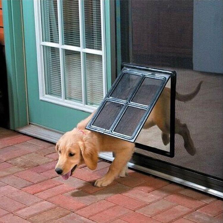 dog walking through pet screen door