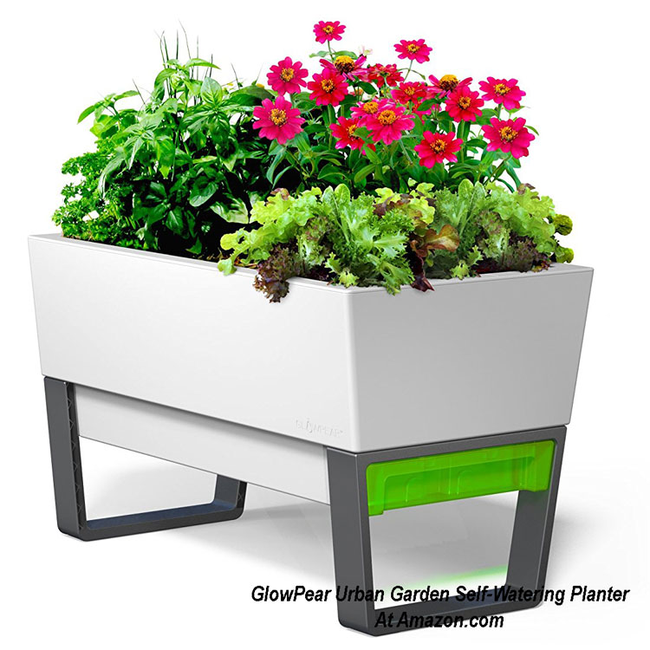 GlowPear Urban Garden Self-Watering Planter from Amazon.com