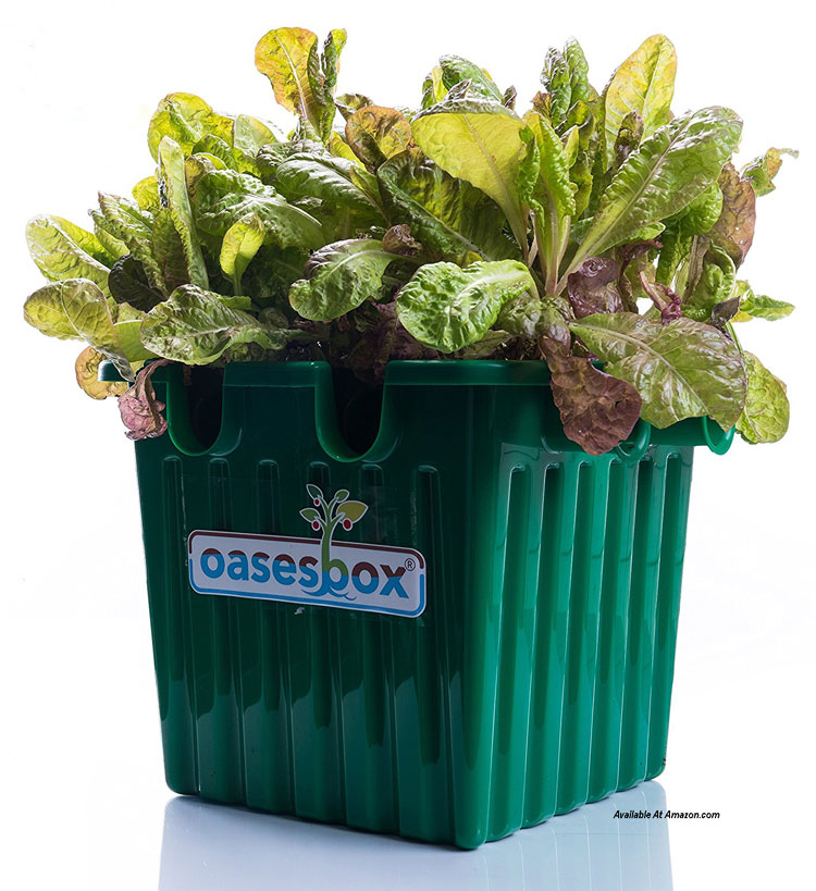 Oasesbox Garden Flower Plant Planter from amazon.com