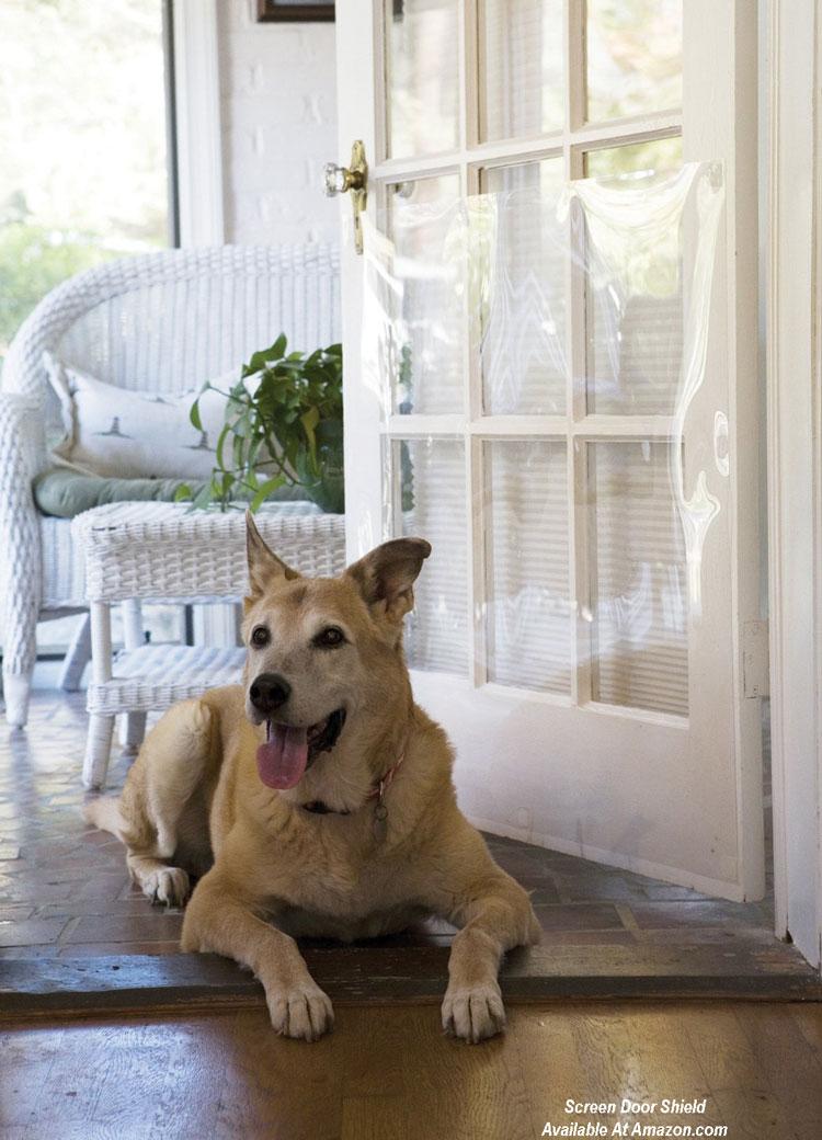 Screen Door Shield with dog on floor