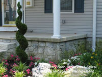 Emerald Green Arborvitae Spiral beside front porch steps