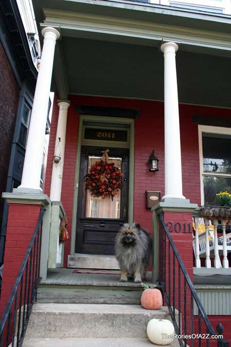 Keeshond on autumn decorated front porch