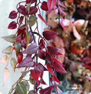use plum colored vines for autumn craft ideas