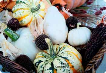 assortment of gourds and squashes