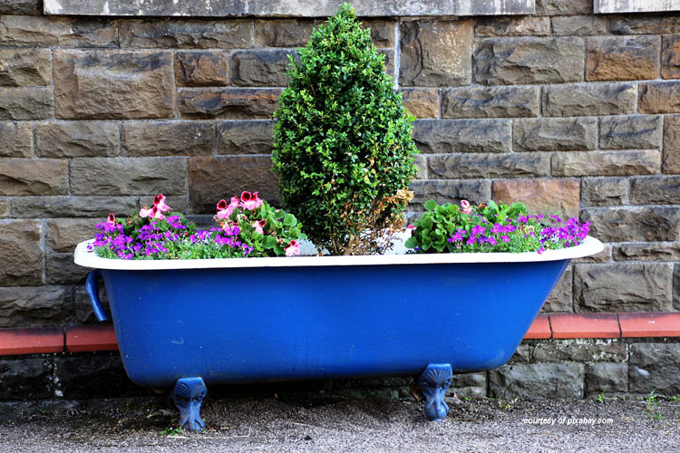 blue bathtub used as outdoor flower planter
