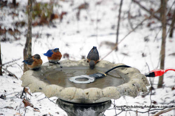 bluebirds enjoying birdbath with de-icer in winter