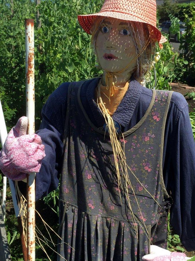 Lovely gardener scarecrow