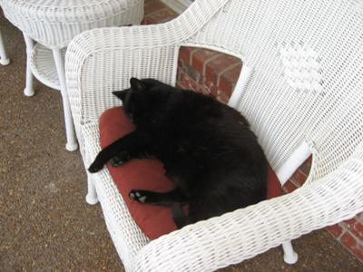 black porch cat sleeping on front porch