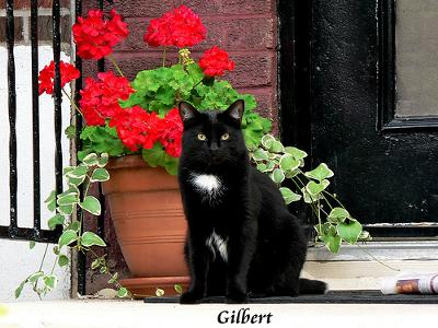 black porch cat and red geraniums
