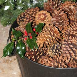 bucket of pine cones
