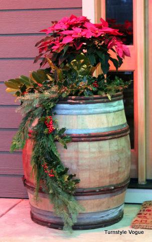 barrel with poinsittas