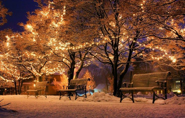 Christmas snow lights on trees