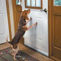 Dog Door Shield Image