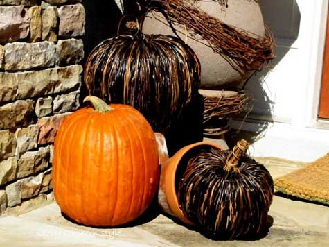 Various kinds of pumpkins for fall