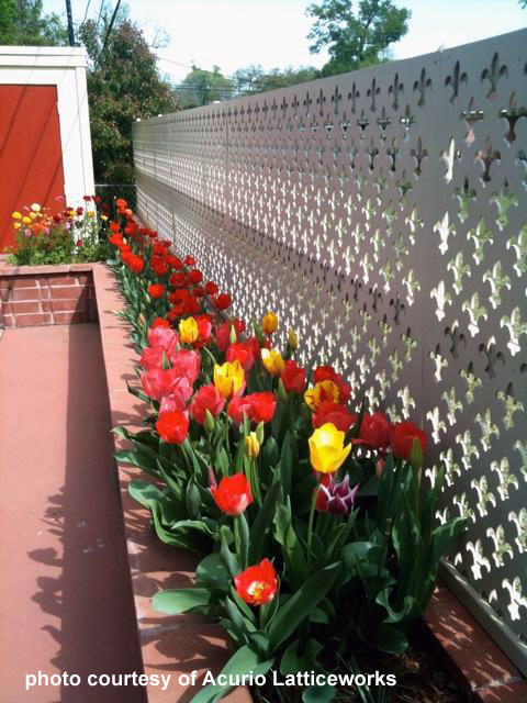 Lattice as backdrop for flower garden