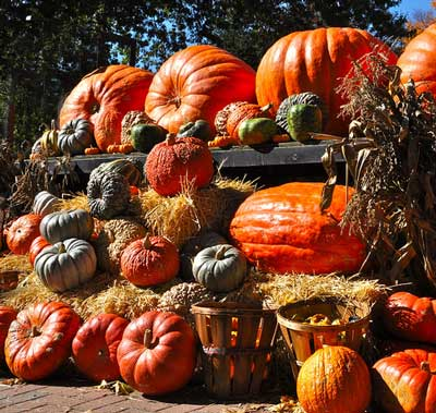 a huge pile of Autumn gourds