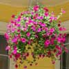 Pretty hanging basket