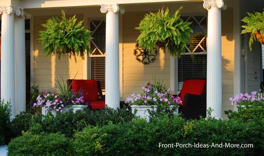 hanging baskets of ferns are a classic choice - beautiful