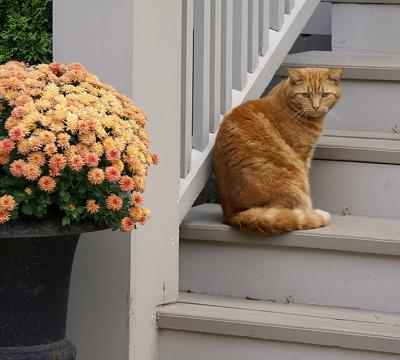 tan cat sitting on porch steps next to autumn flowers