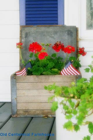 Old milk bottle crate filled with pretty red geraniums and US flags