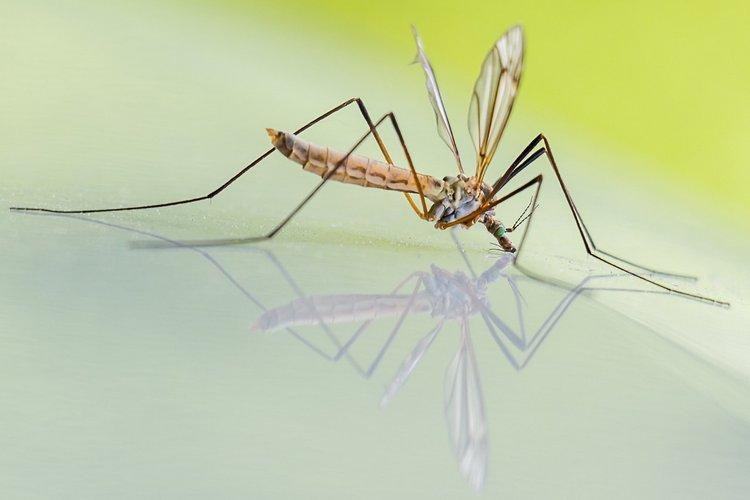 mosquito photo from pixabay.com