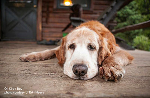 sleepy dog on porch, ol kirby, photo by erin neese