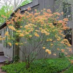 Beautiful azalea around the porch by J. Paul Moore