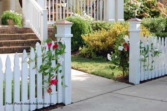 beautiful picket fence with roses