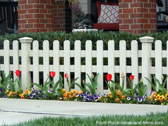picket fence lined with tulips and pansies in the spring