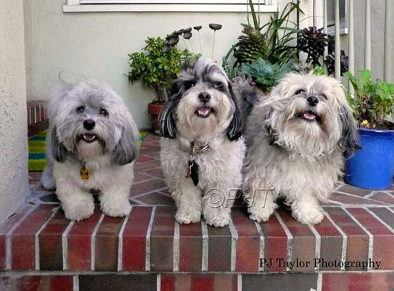 Desi, Baba, and Willy, three cute dogs on a porch