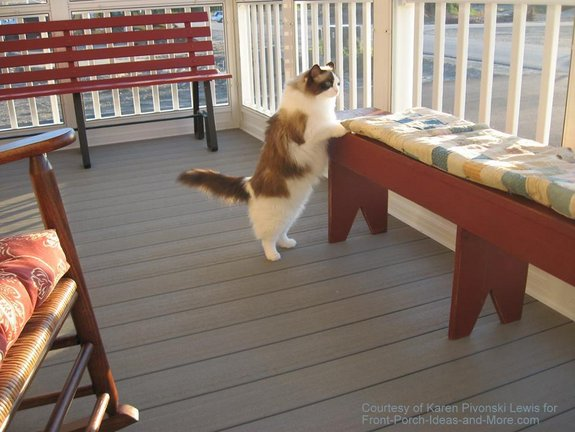 Karen's ragdoll cat, Chinda, loves her porch