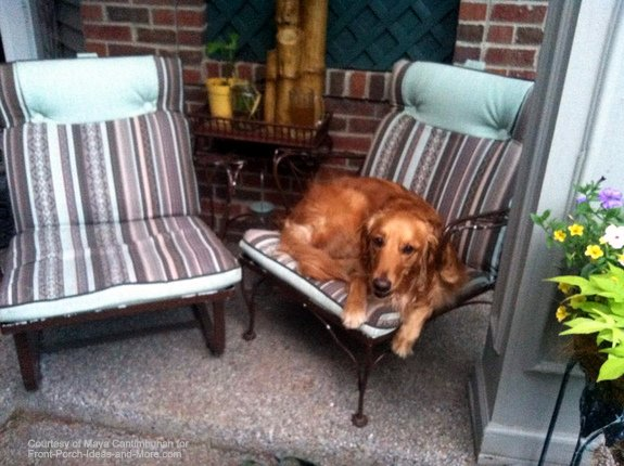 This cute dog is right at home on the front porch
