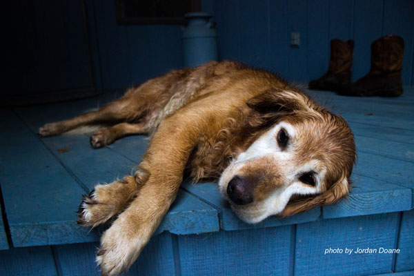 sleeping dog on front porch