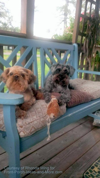 Paisley Anne and Gidget are friends on the porch