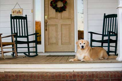 Friendly dog on porch with rocking chairs