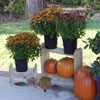 thrifty porch display stands