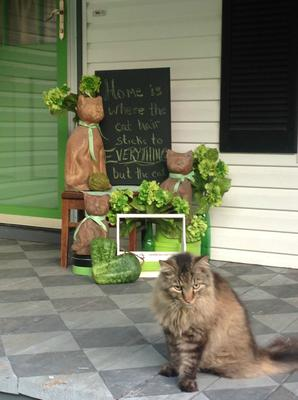 purrfect summer on the front porch