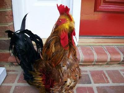 rooster on porch steps