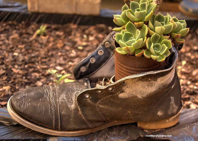 old shoe turned into planter