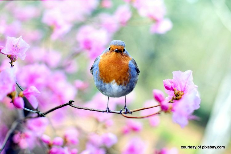 spring bird in beautiful flowering tree